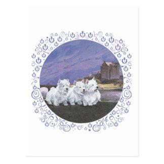 Westies in Scotland Postcard
