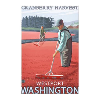 Westport, WashingtonCranberry Bog Harvest Canvas Print