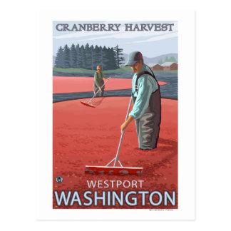 Westport WashingtonCranberry Bog Harvest Post Card