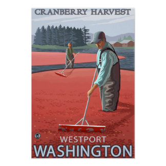 Westport, WashingtonCranberry Bog Harvest Poster