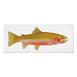 Westslope Cutthroat Trout Watercolor Poster