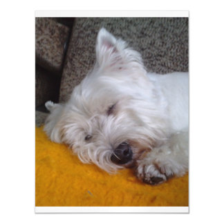 Westy_sleeping.png Magnetic Card