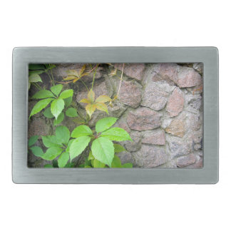 Wet and green shoots of wild grapes belt buckle