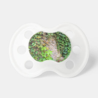 Wet and green shoots of wild grapes pacifier