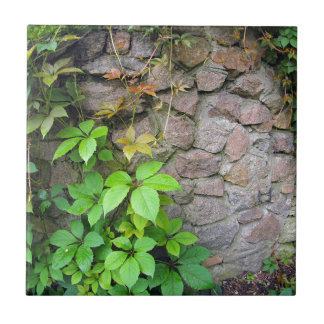 Wet and green shoots of wild grapes small square tile