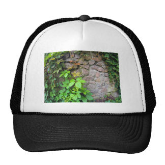 Wet and green shoots of wild grapes trucker hat