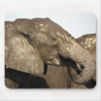 Wet and muddy elephant mouse pads