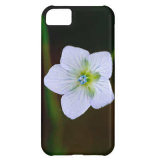Wet and Wildflower iPhone 5C Covers