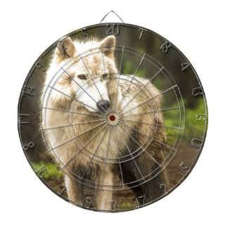 Wet Arctic Wolf in Spring Photo Dart Boards