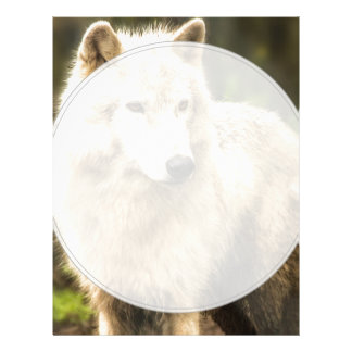 Wet Arctic Wolf in Spring Photo Letterhead