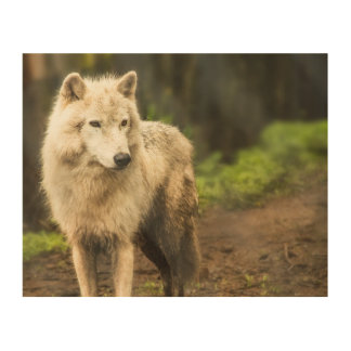 Wet Arctic Wolf in Spring Photo Wood Wall Decor