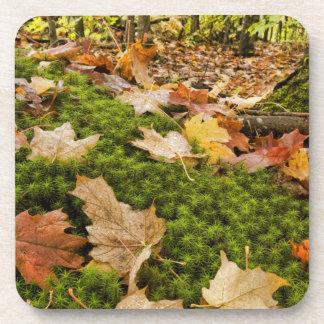 Wet Autumn Forest Floor Photograph Drink Coaster