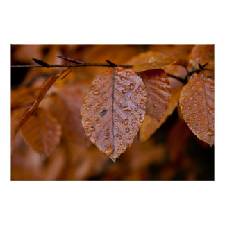 Wet autumn leaf posters