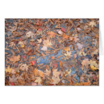 Wet Autumn Leaves Note Card