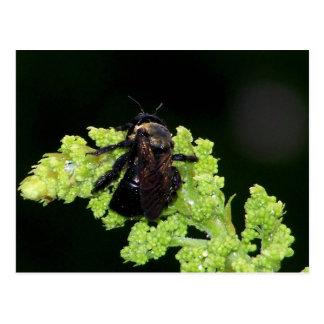 Wet Bumblebee Postcard