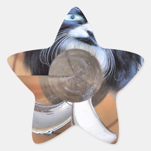 Wet Cat Star Sticker