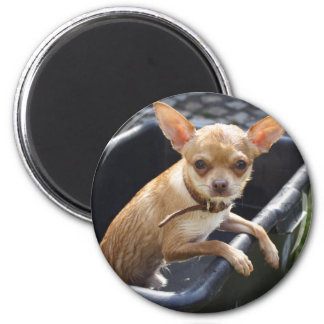 Wet Chihuahua 2 Inch Round Magnet