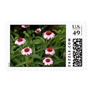 'Wet Coneplowers' Stamp
