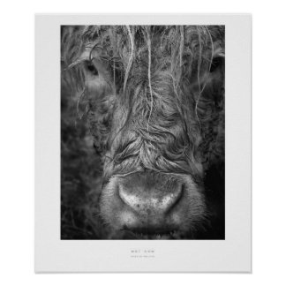 Wet Cow Wall Print