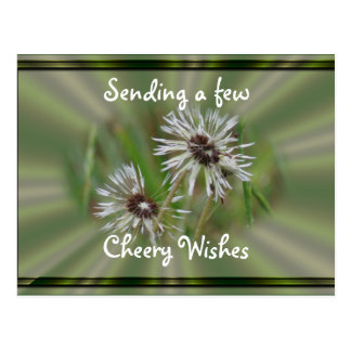 Wet Dandelion Postcard- cheer or any occasion Postcard