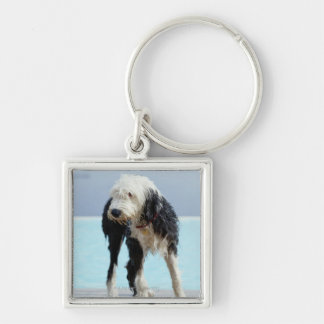 Wet Dog By a Swimming Pool Keychain