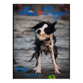 Wet Dog Postcard