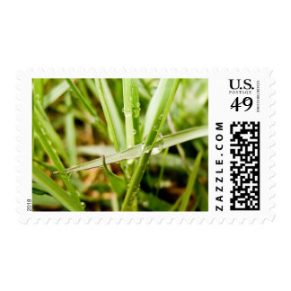 Wet Grass Postage Stamps