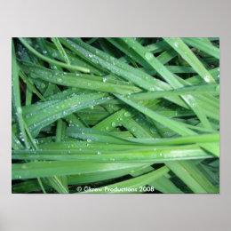 Wet Grass print