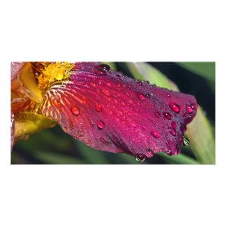 Wet Iris Card