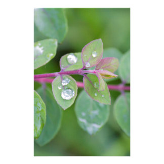 wet leaf in the garden stationery