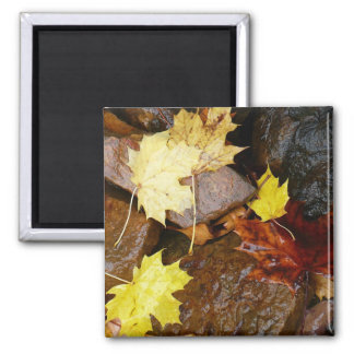 Wet Leaves and Rocks Autumn Nature Photography 2 Inch Square Magnet