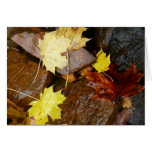 Wet Leaves and Rocks Autumn Nature Photography Card