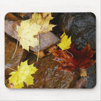 Wet Leaves and Rocks Autumn Nature Photography Mouse Pad