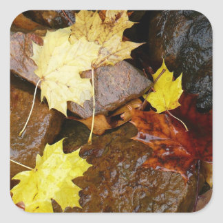 Wet Leaves and Rocks Sticker