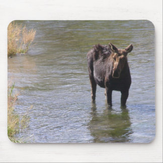 wet moose mouse pad