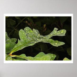 Wet Oak Leaf Poster