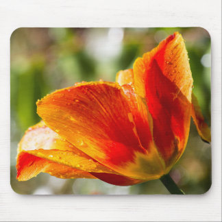 Wet Orange and Yellow Tulip Mouse Pads