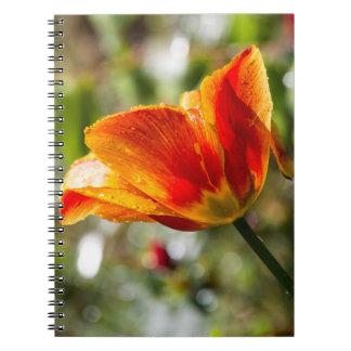 Wet Orange and Yellow Tulip Notebook