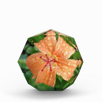 Wet Orange Hibiscus Award