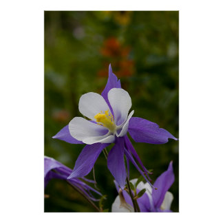 Wet Purple Columbine Print