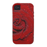 Wet Rose iPhone 4/4S Cover