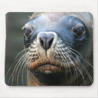 Wet Seal Mouse Pad