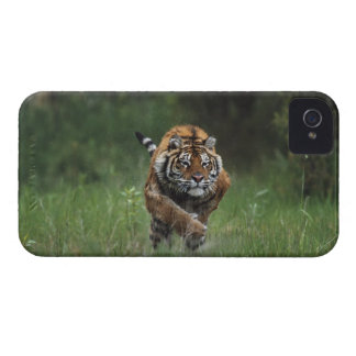 Wet Siberian Tiger Charging iPhone 4 Cover