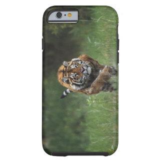 Wet Siberian Tiger Charging Tough iPhone 6 Case