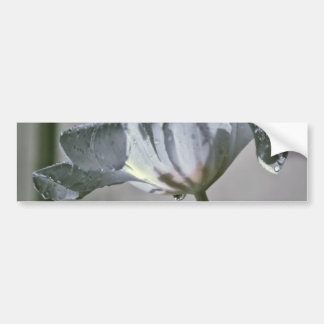 Wet Tulip Infrared Bumper Sticker