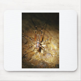Weta creepy crawly striped insects mouse pad