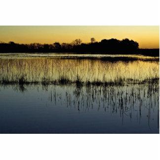 Wetland at sunset photo sculptures