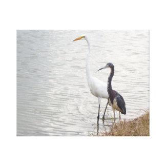 Wetland Birds Egret and Heron Canvas Print