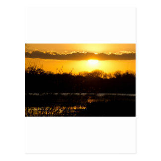 Wetland Gold Postcard