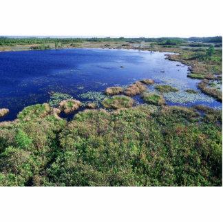 Wetland habitat at Okefenokee National Wildlife Re Photo Cutouts